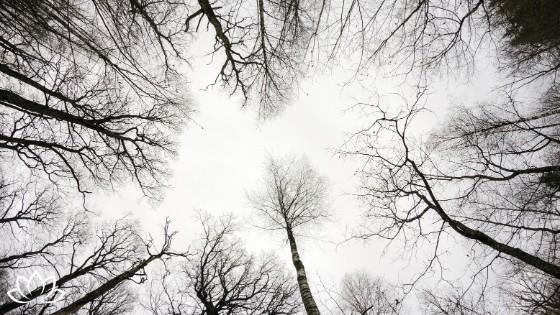 Lebensfreude an trüben Herbsttagen - 5 Schritte - Beitragsbild 1